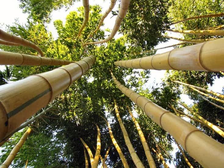 Jardins Les Bambous de Planbuisson